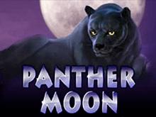 Panther Moon с выводом денег