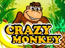 Crazy Monkey в онлайн казино