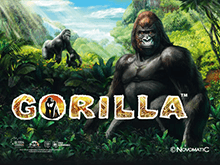 Автоматы Gorilla на деньги